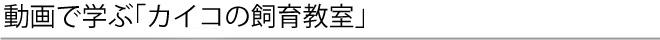動画で学ぶ「カイコの飼育教室」 - 群馬県立日本絹の里